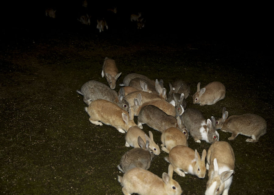 Welcome to the rabbit island